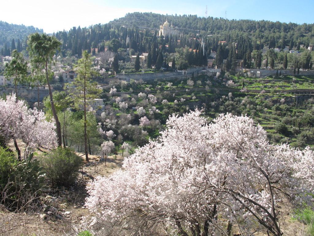 הרי ירושלים, צילום יחצ באדיבות החברה להגנת הטבע רון חבילויו