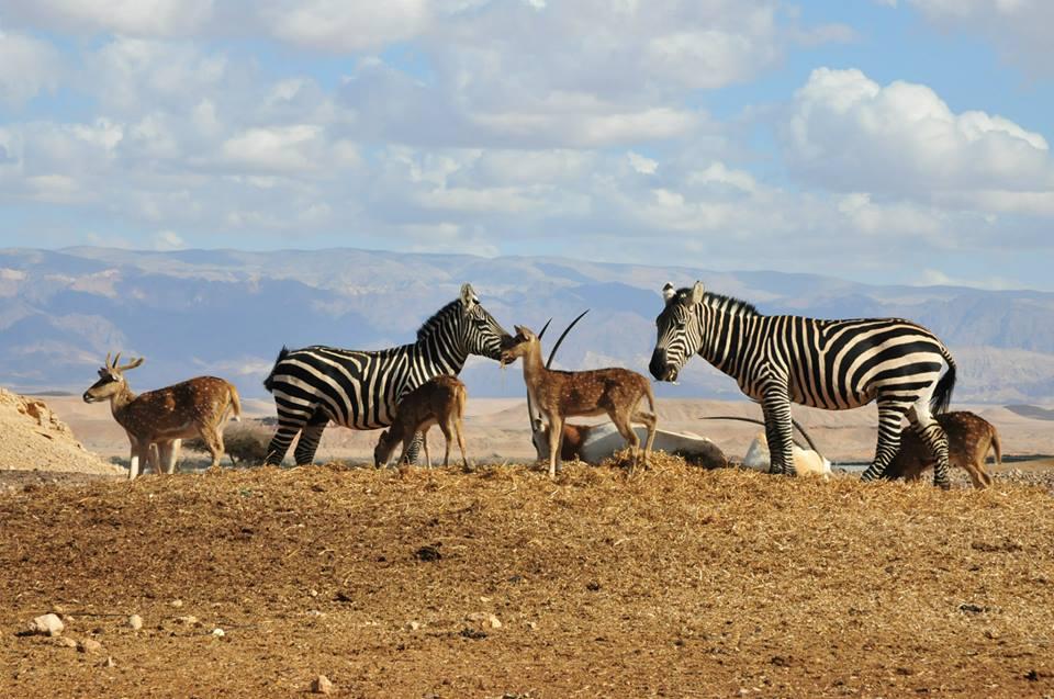 צופר - חוות האנטילופות צילום יוסי בן באדיבות תיירות ערבה