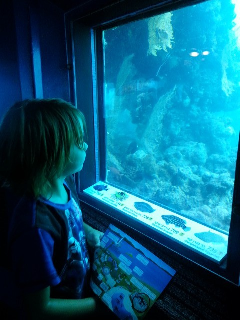 שישה מטרים מתחת לפני הים עולם קסום מבעד לחלון צילום טלי בריל