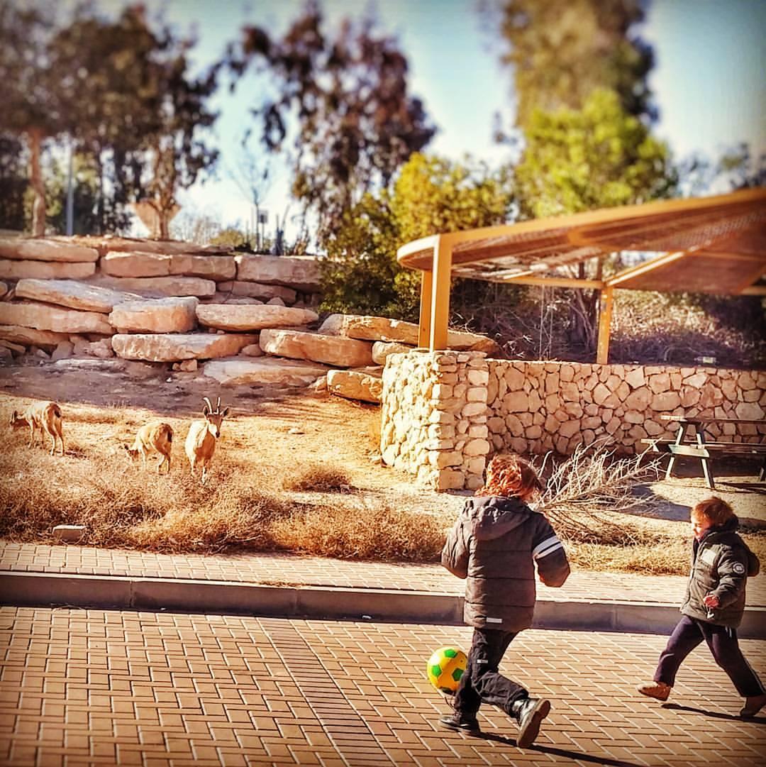 ילדות מצפאית כדורגל עם יעלים צילום טלי בריל