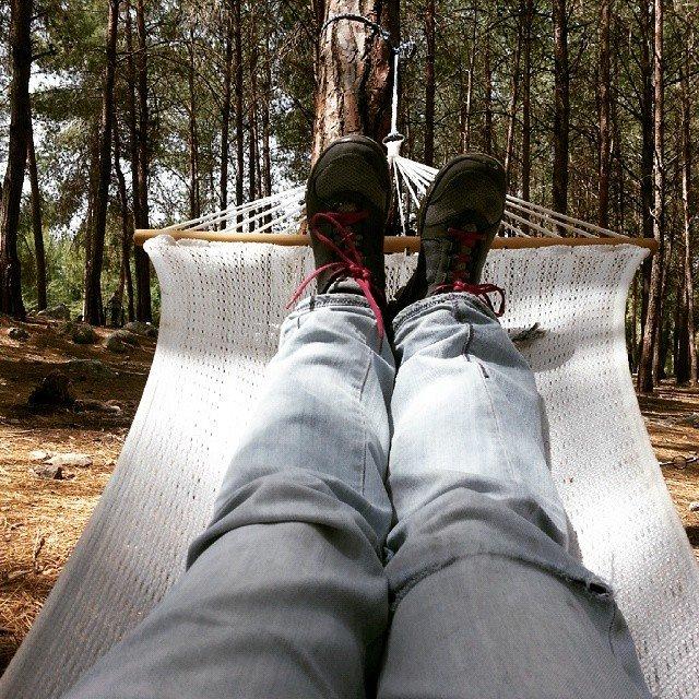 פיקניק ביער או בחורשה - צילום טלי בריל